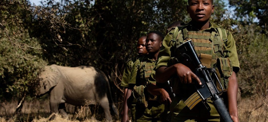 Zimbabwe: Akashinga to counter poaching